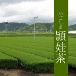 【鹿児島県 頴娃茶】煎茶 ゆたかみどり