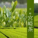 【宮崎県 宮崎茶】釜炒り茶(上級)緑茶 100g