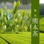 【熊本県 くまもと茶】玉緑茶 森のくまさん 3缶セット