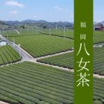 【福岡 八女茶】極上かぶせ茶100g×1袋;ふるさと納税返礼品