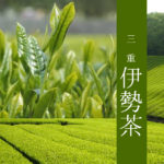 【三重 伊勢茶】寿老園 熟成の味 冠茶  100g