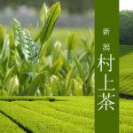 【新潟 村上茶】煎茶・紅茶セット:ふるさと納税返礼品